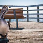 Pelican Pier by williamsrdan