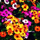 Spring Flowers by ShellyKay