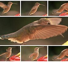 FEMALE HUMMINGBIRD ANNA'S COLLAGE by JAYMILO