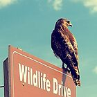 Wildlife Drive Greeter by Sharon Woerner