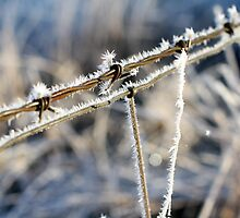 Frozen Barbed Wire by NicoleCampbell