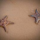Stars on the Beach - Moreton Island Qld Australia by Beth  Wode