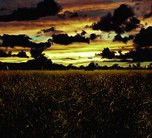 Dark Meadow Landscape  by DFLCreative