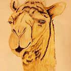 The Handsome Camel by aprilann