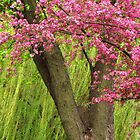 Springtime Trees by lorilee