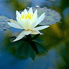 Water lily - white by KarenEaton