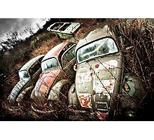 Beetles In Arms Photographic Print