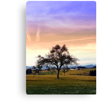 Old tree and amazing cloudy sky | landscape photography Canvas Print