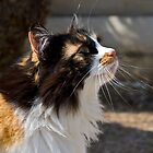 Baska Cat by Valerija S.  Vlasov