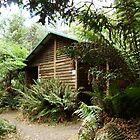 Liffey Falls Dunny, Tasmania by RedNomadOZ