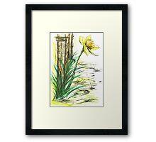 Blooming  Daffodil Framed Print
