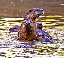 2014 May Swarm of Otters by Rick  Grisolano Photography LLC