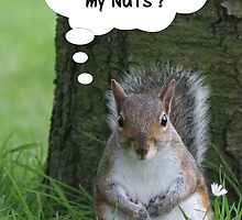 Squirrel - where are my nuts? by Peter Barrett