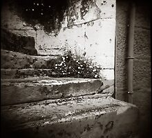 { Surry Hills Steps } by Lucia Fischer