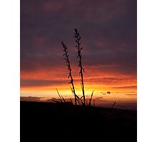 Sunset Silhouette Native Flax Photographic Print
