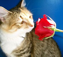 A Cat Smells A Rose by Righteous Zombie Photography