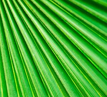 Abstract Palm Fan by MMPhotographyUK