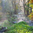 Buchan Creek East Gippsland Vic. by helmutk