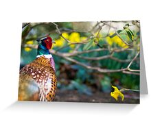 Male pheasant with daffodils Greeting Card
