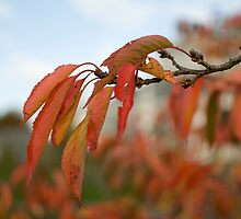 Autumn fall leaves on a branch by thommoore