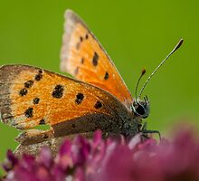 Butterfly in the sun by cuttlefish714