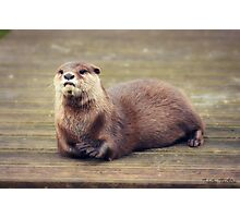 The Pondering Otter Photographic Print