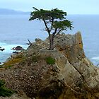 The Lone Cypress Along 17-Mile Drive by Diana Graves Photography