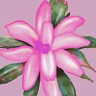 Painted Pink Bromeliad by Rosalie Scanlon