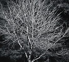 The Naked Tree by Trudi Skinn