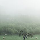 Sheeps by Hudolin
