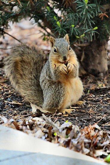 Squeeeee! Squirrel! by Keala