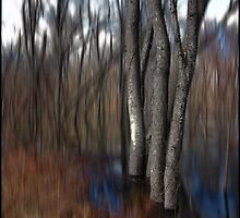 Spring Colors in a Floodplain Forest by Wayne King