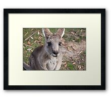 Those Eyes - Halls Gap Framed Print