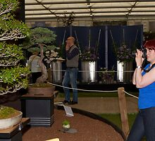 Bonsai trees at RHS Chelsea Flower Show by Keith Larby