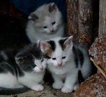 3 Little Kittens by MaeBelle