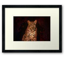 Night spots Framed Print