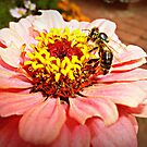 Gerbera & Bee- Donegan's Farm by EdsMum