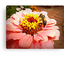 Gerbera & Bee- Donegan's Farm Canvas Print