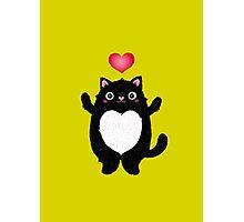 Fat Cat Photographic Print