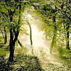 Morning Trees by John Novis