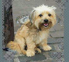 Louie the Shorkie-Tzu : Shih Tzu Yorkshire Terrier (Yorkie) Mix by Jay Taylor
