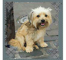 Louie the Shorkie-Tzu : Shih Tzu Yorkshire Terrier (Yorkie) Mix Photographic Print
