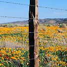 Don't Fence Me In by Ron Hannah