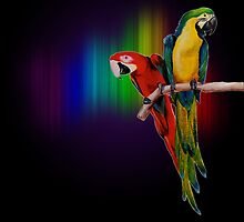 Parrots by emok
