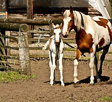 Painted Mother & Foal 2 by Cynthia Swinnen