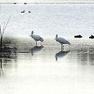 THE SILVER LAKE by Rocksygal52