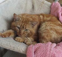snuggly boy has caught a comfy by pumpkincat