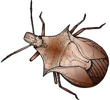 Stink Bug, in color by Feral Beagle LLC