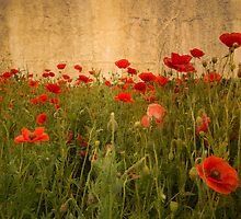 In Flanders Fields the poppies blow  by Rob Hawkins