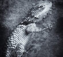 ©NS Lizard Portraid VAD Monochrome by OmarHernandez